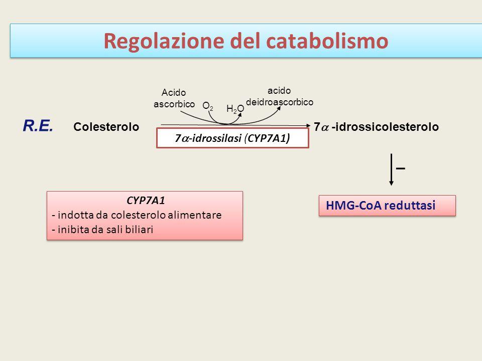 Regolazione del catabolismo
