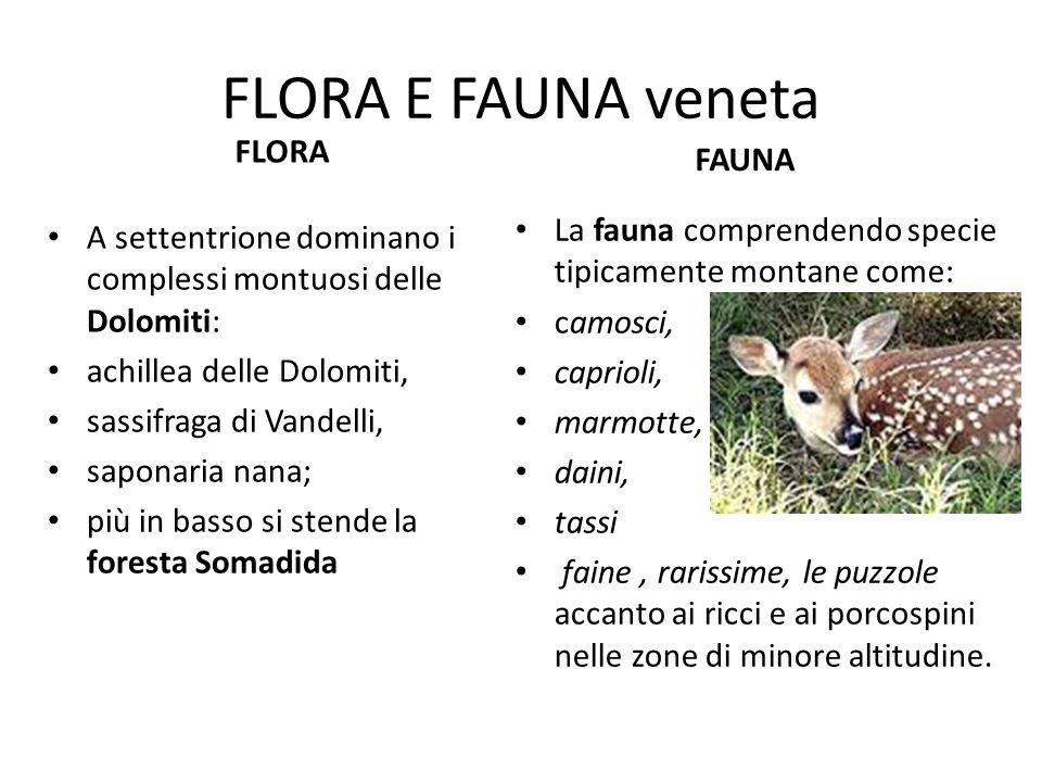 FLORA E FAUNA veneta FLORA FAUNA