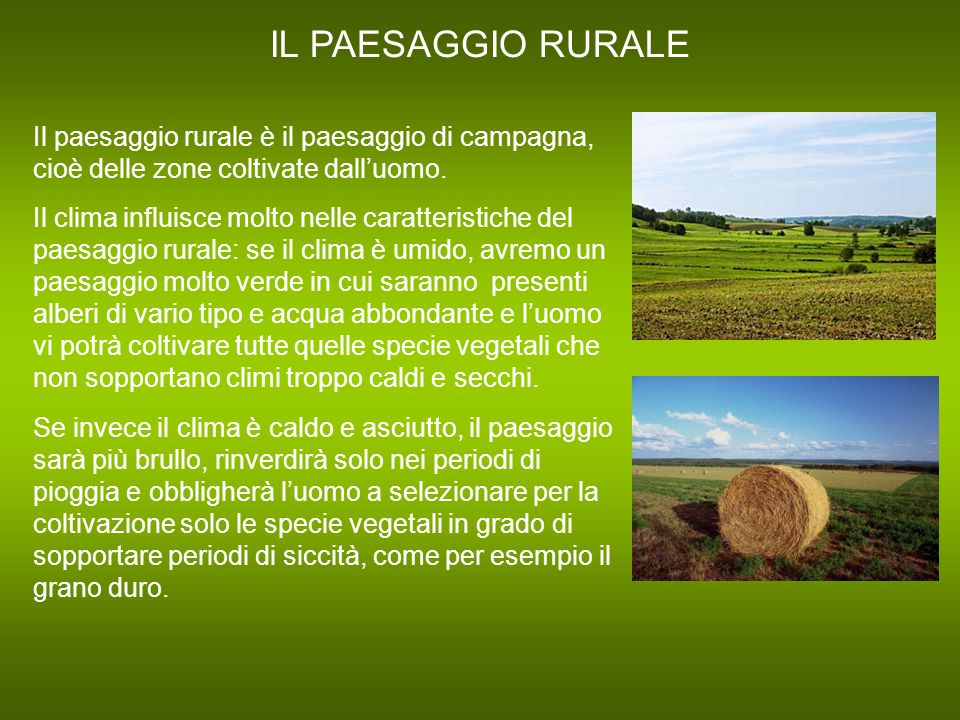 IL PAESAGGIO RURALE Il paesaggio rurale è il paesaggio di campagna, cioè delle zone coltivate dall'uomo.