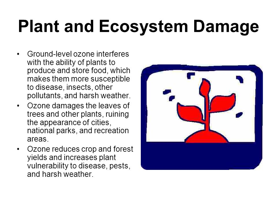 Plant and Ecosystem Damage