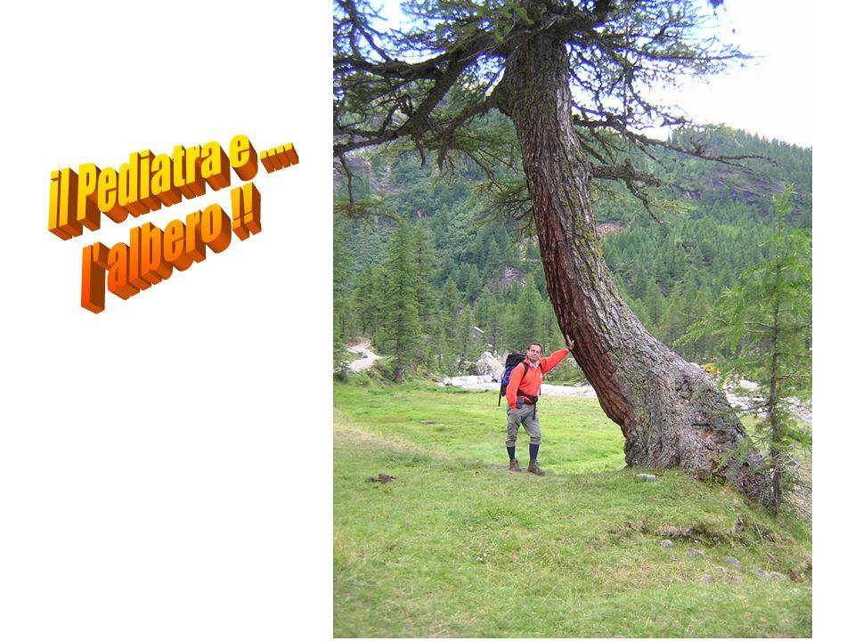 il Pediatra e .... l albero !!