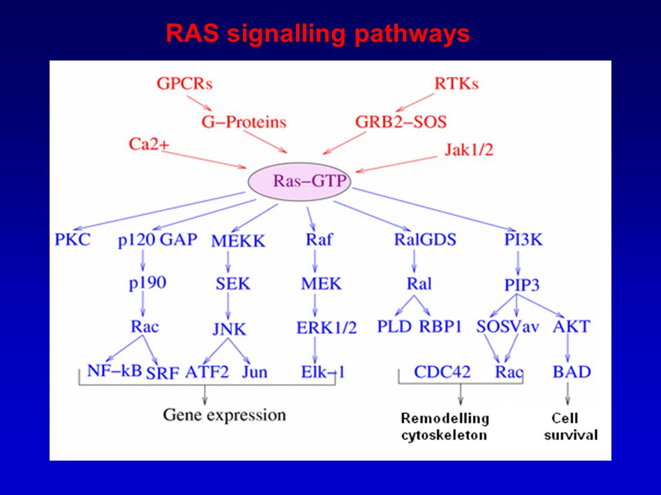 RAS signalling pathways
