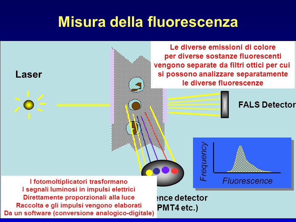 Misura della fluorescenza