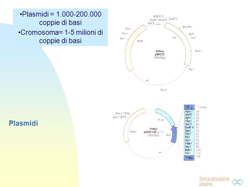 Plasmidi = 1.000-200.000 coppie di basi