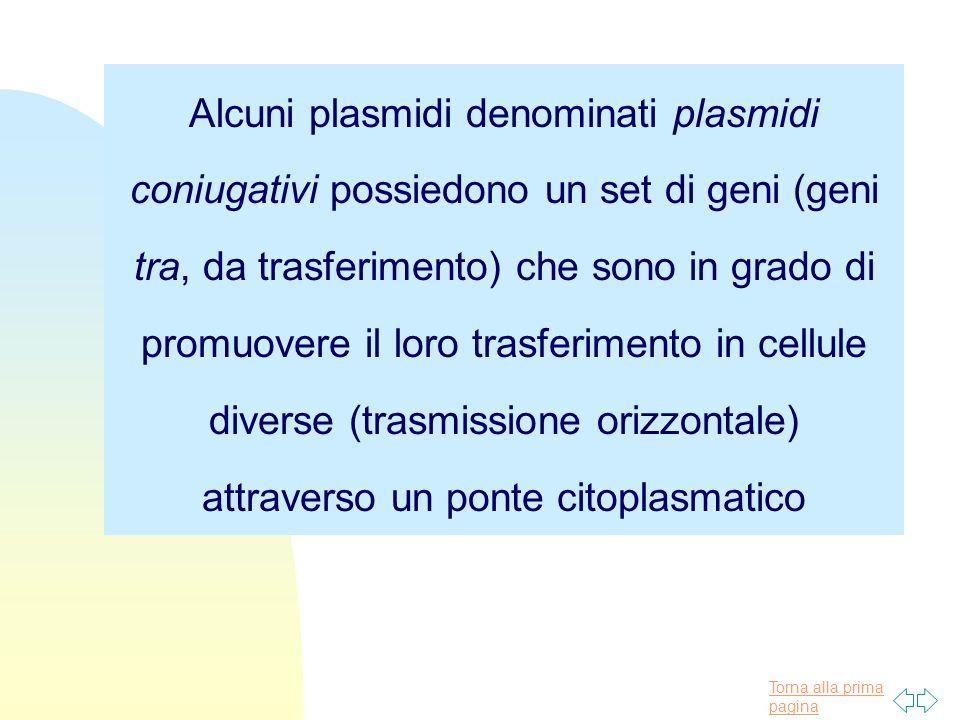 Alcuni plasmidi denominati plasmidi coniugativi possiedono un set di geni (geni tra, da trasferimento) che sono in grado di promuovere il loro trasferimento in cellule diverse (trasmissione orizzontale) attraverso un ponte citoplasmatico