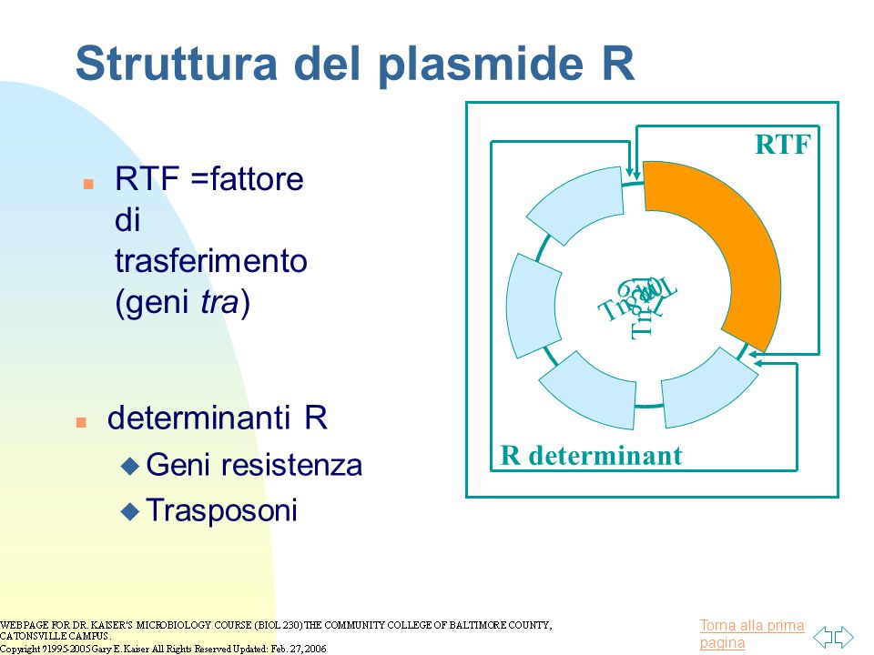 Struttura del plasmide R