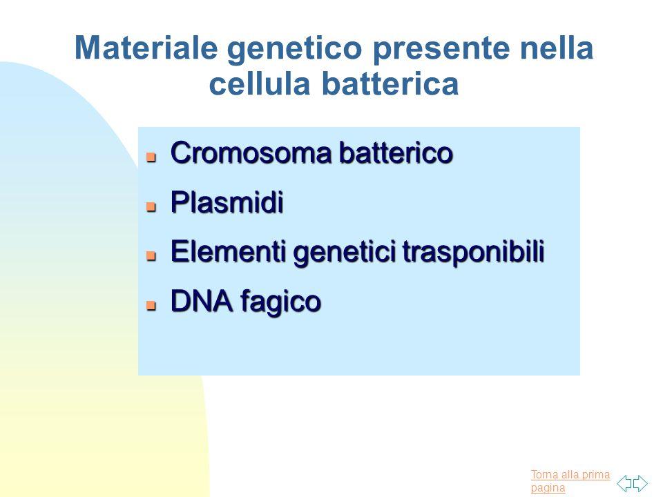 Materiale genetico presente nella cellula batterica