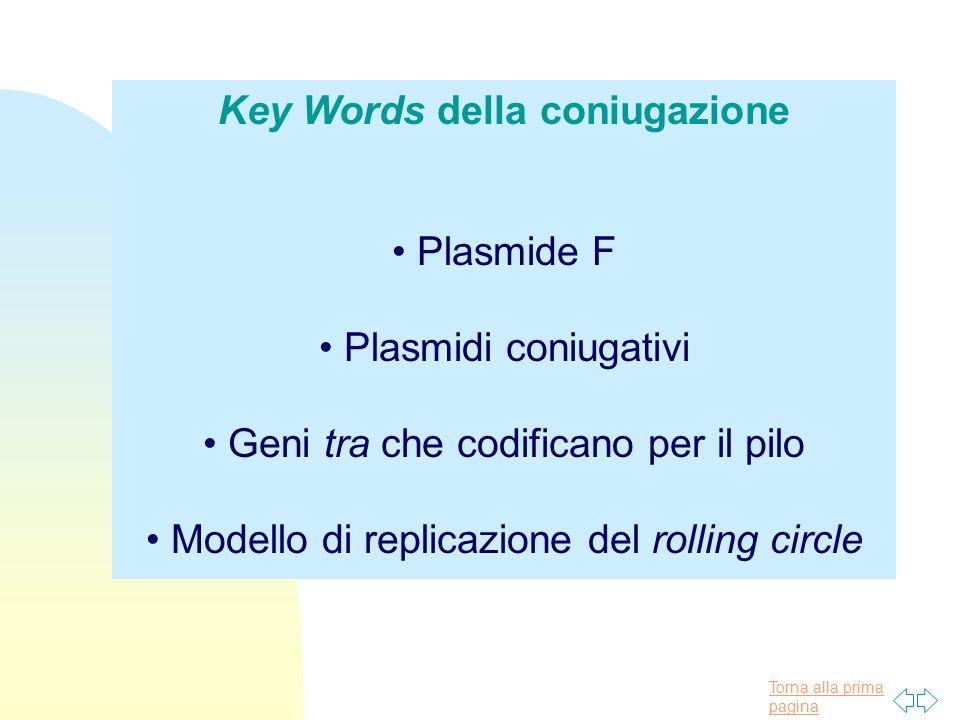 Key Words della coniugazione