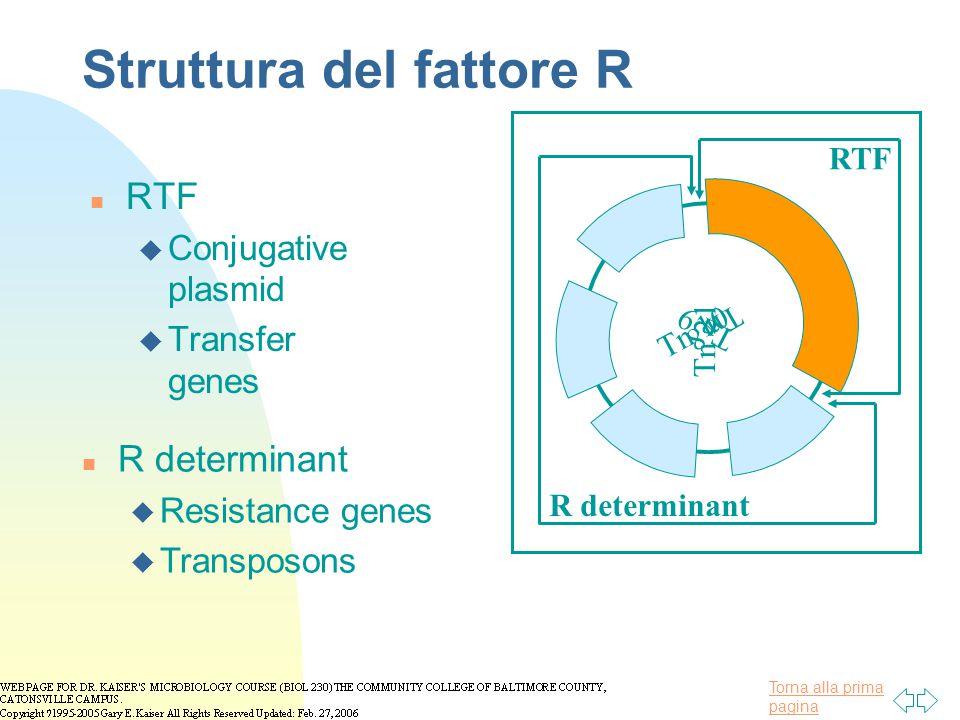 Struttura del fattore R
