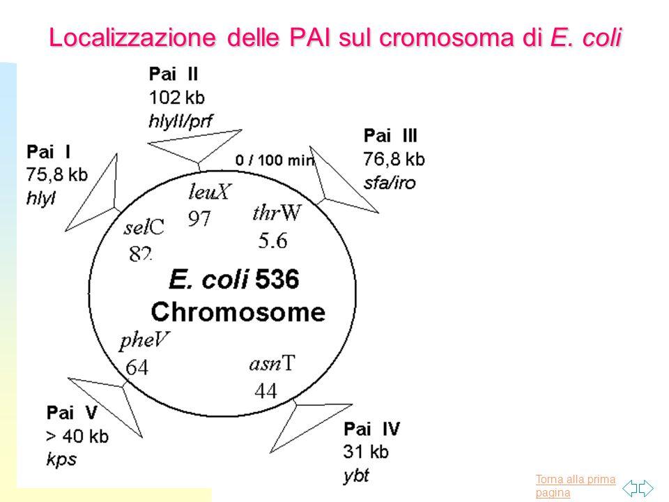 Localizzazione delle PAI sul cromosoma di E. coli