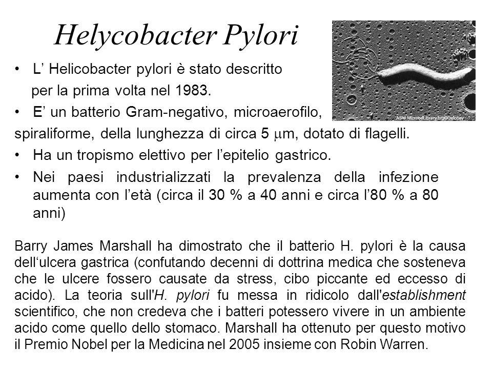 Helycobacter Pylori L' Helicobacter pylori è stato descritto