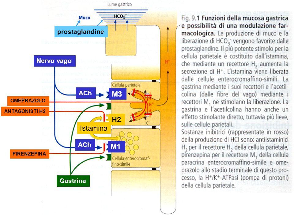 M3 H2 Istamina M1 prostaglandine Nervo vago ACh ACh Gastrina