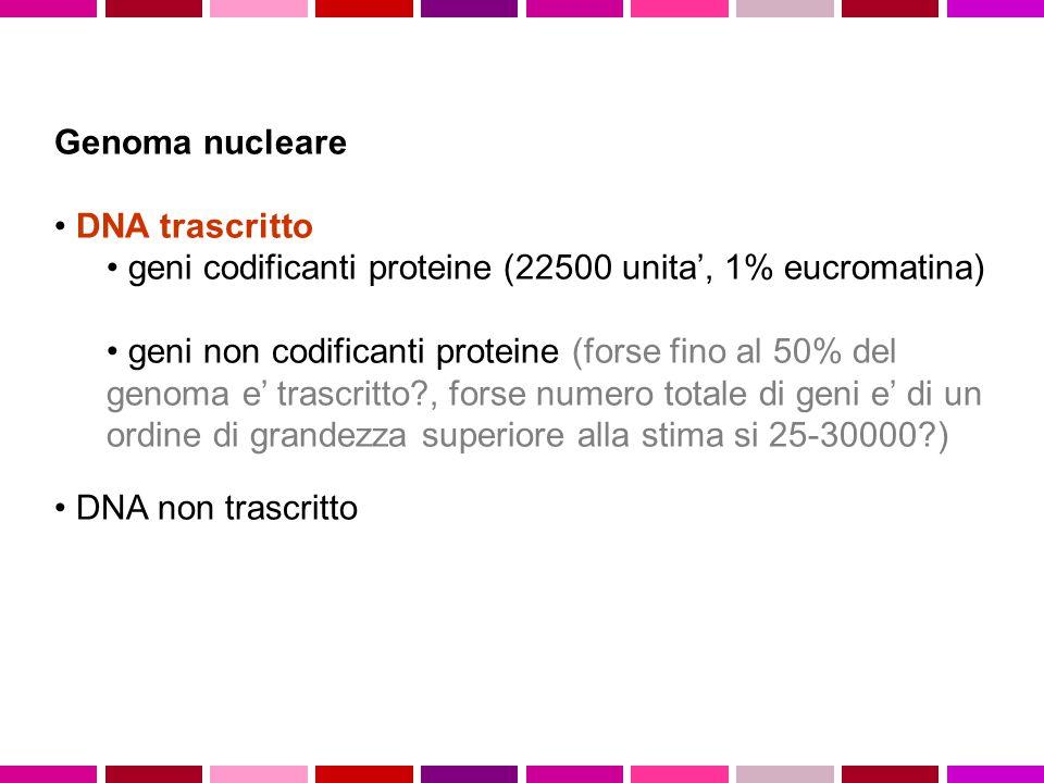 Genoma nucleare DNA trascritto. geni codificanti proteine (22500 unita', 1% eucromatina)