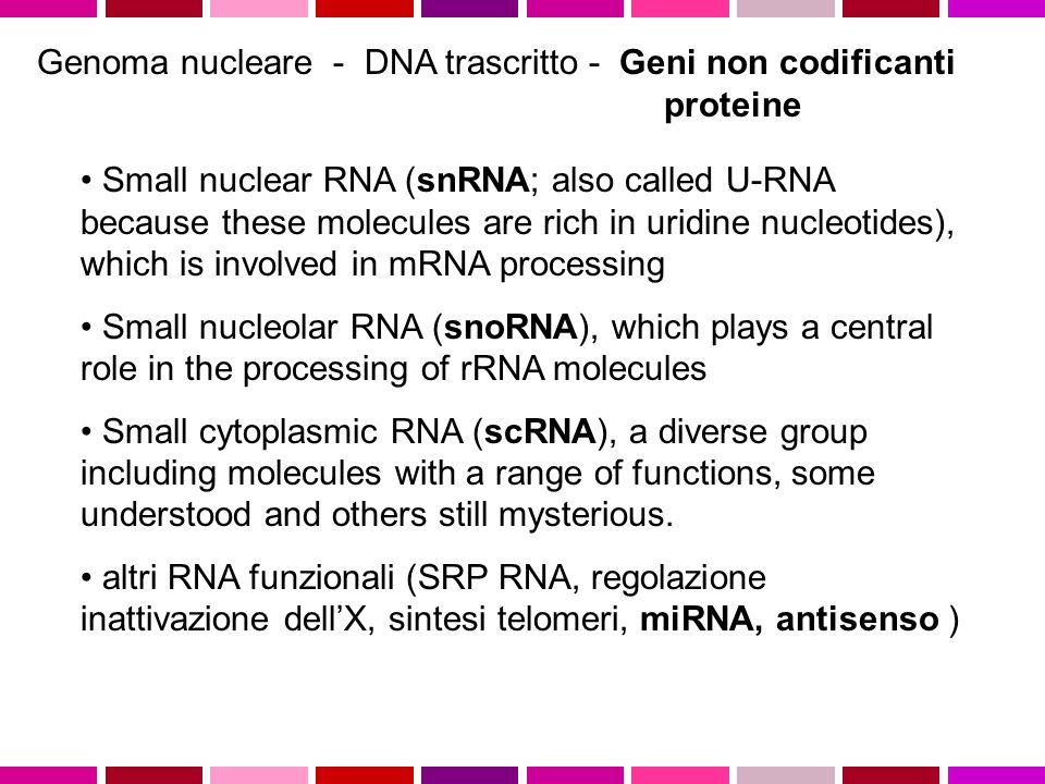 Genoma nucleare - DNA trascritto - Geni non codificanti proteine