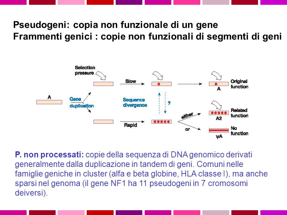Pseudogeni: copia non funzionale di un gene