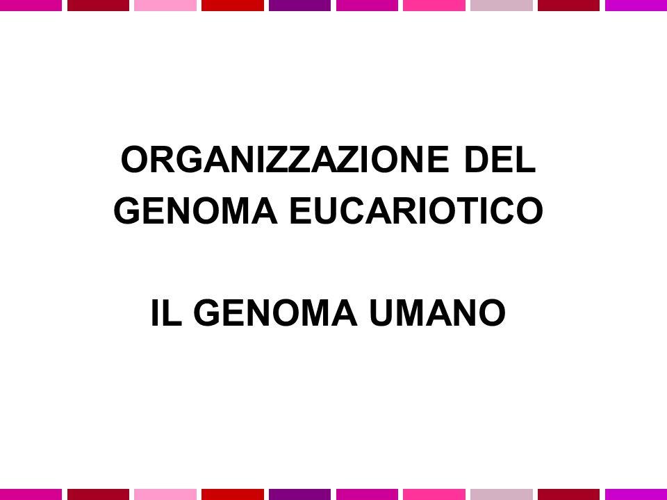 ORGANIZZAZIONE DEL GENOMA EUCARIOTICO