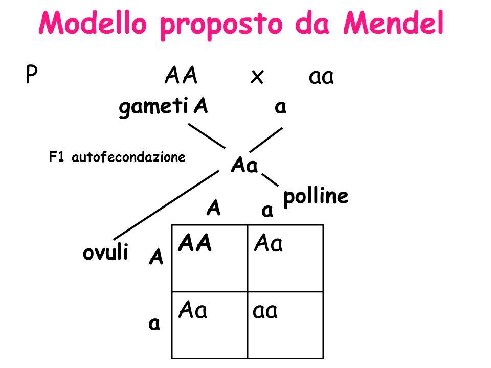 Modello proposto da Mendel