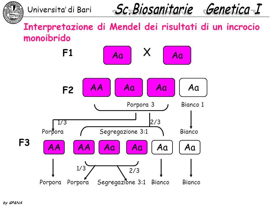 Interpretazione di Mendel dei risultati di un incrocio monoibrido