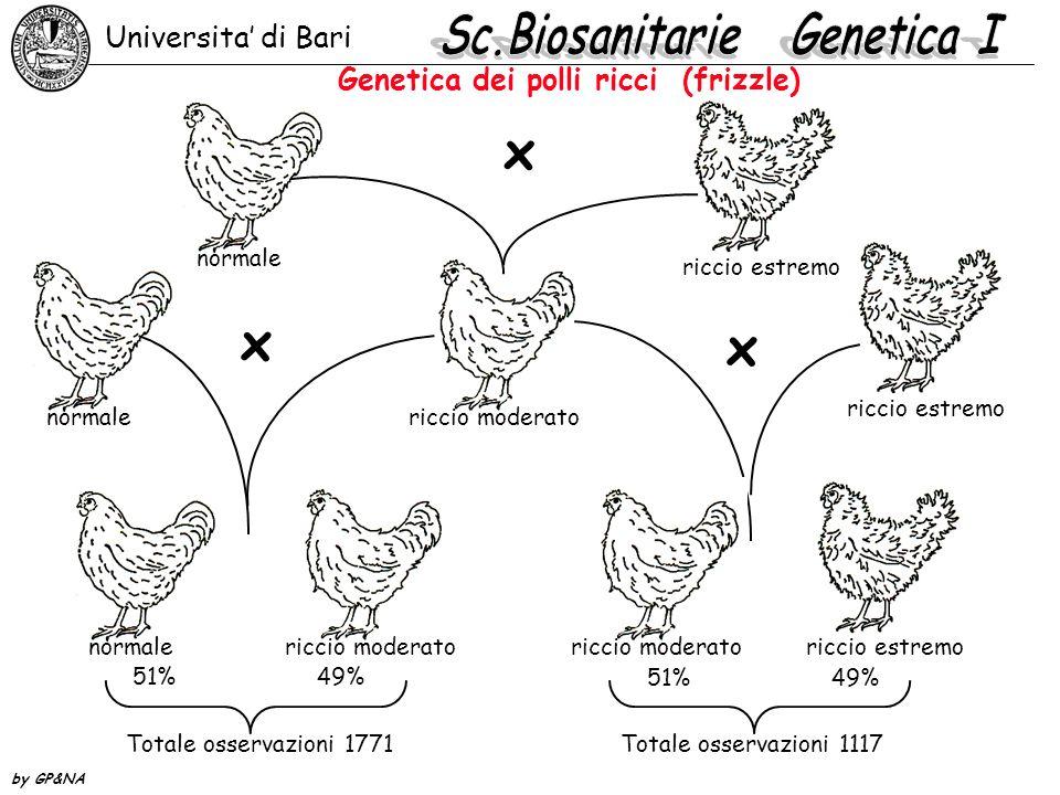 Genetica dei polli ricci (frizzle)