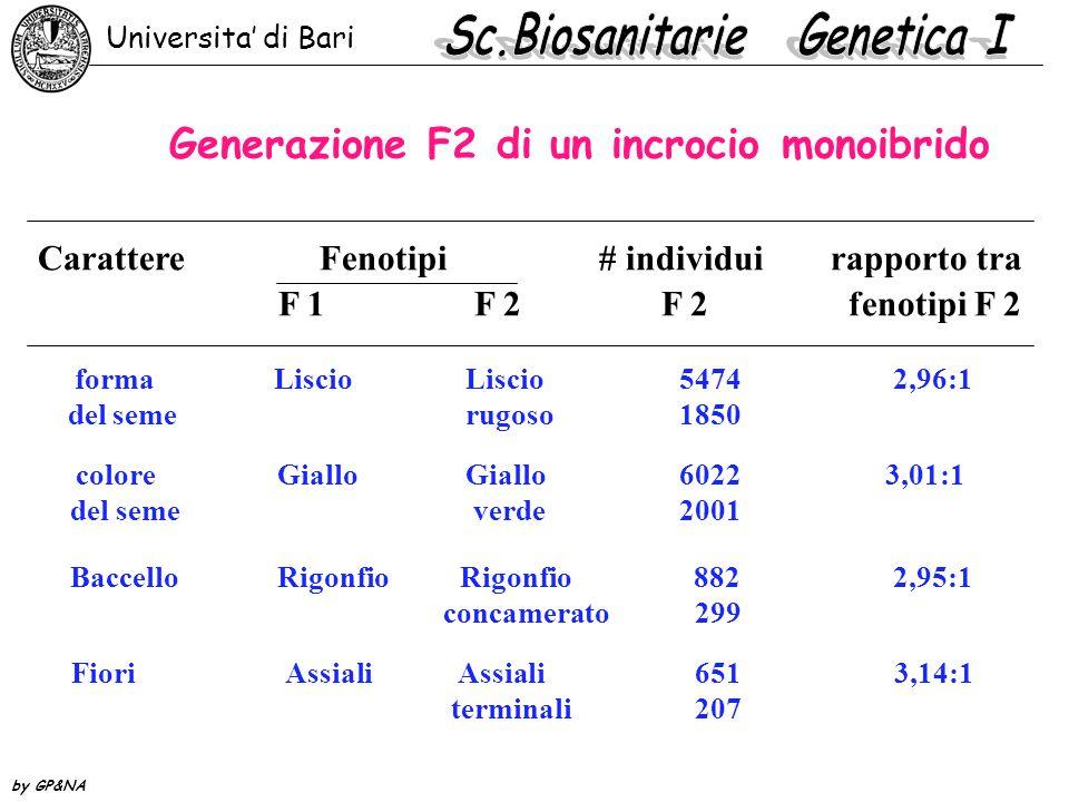 Generazione F2 di un incrocio monoibrido