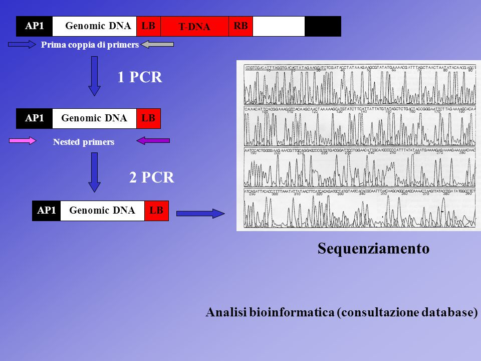 1 PCR 2 PCR Sequenziamento