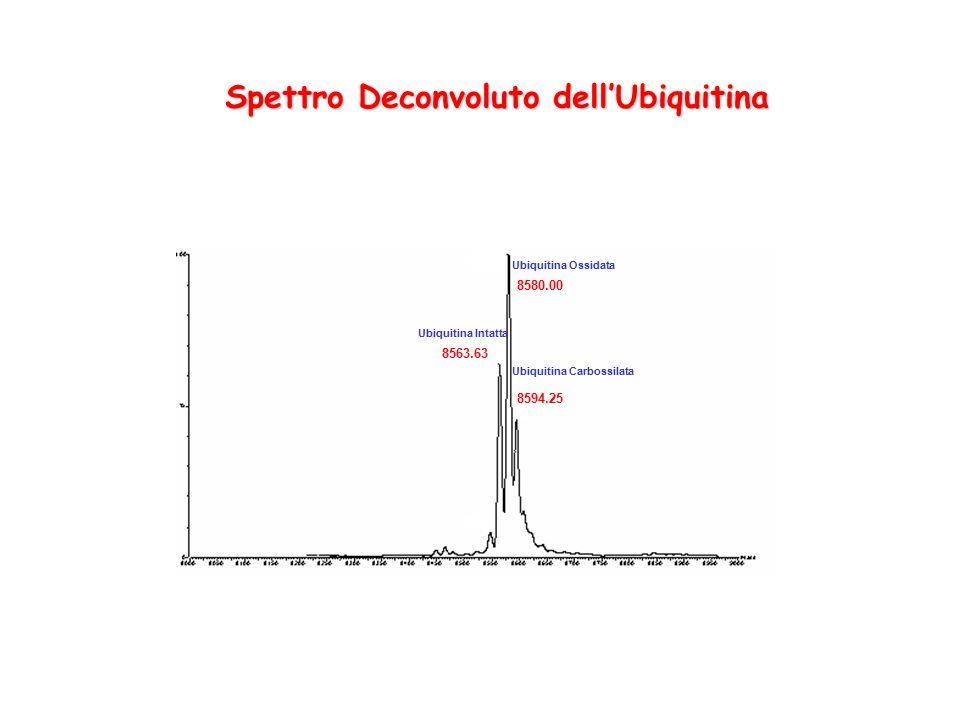 Spettro Deconvoluto dell'Ubiquitina