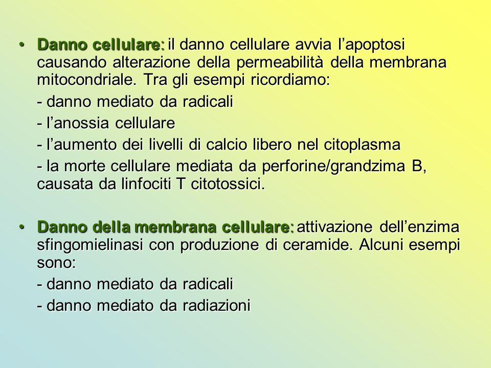 Danno cellulare: il danno cellulare avvia l'apoptosi causando alterazione della permeabilità della membrana mitocondriale. Tra gli esempi ricordiamo: