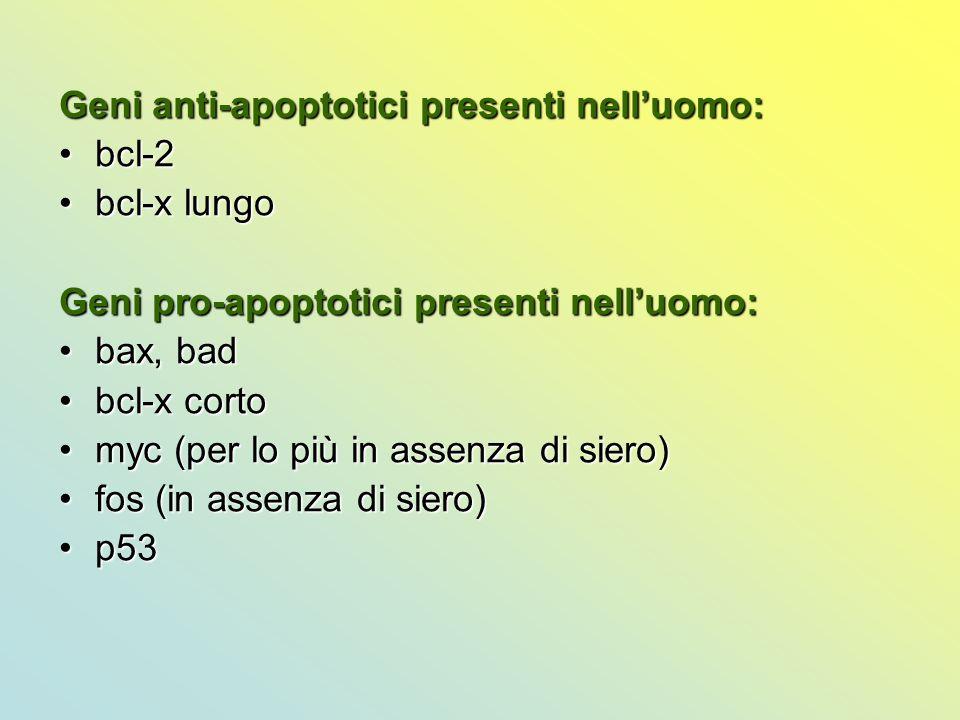 Geni anti-apoptotici presenti nell'uomo: