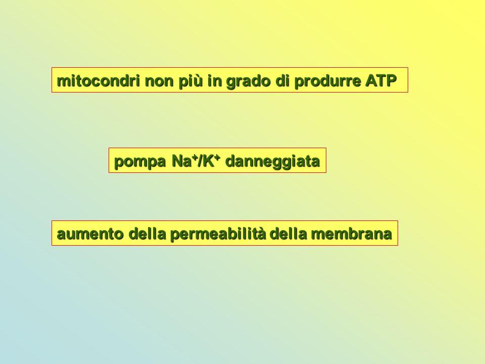 mitocondri non più in grado di produrre ATP