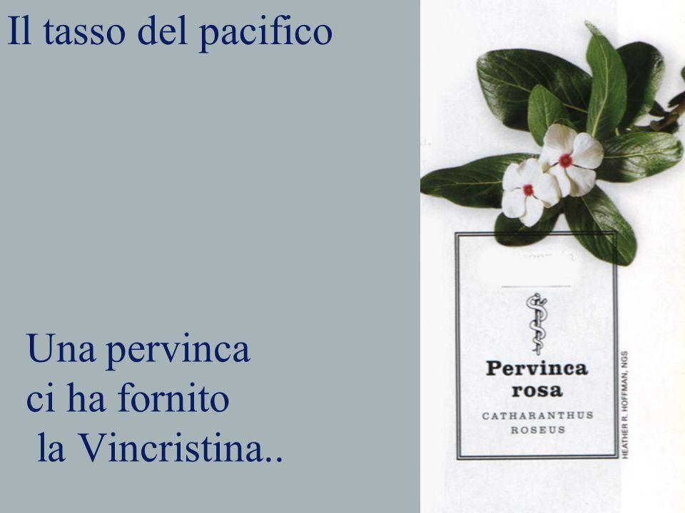 Una pervinca ci ha fornito la Vincristina..