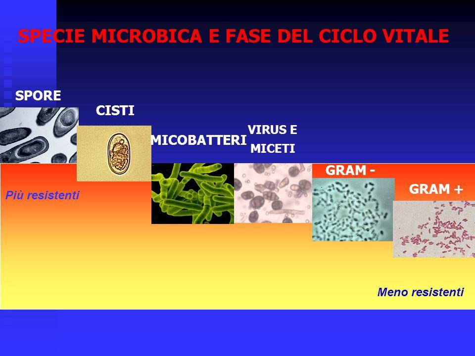 SPECIE MICROBICA E FASE DEL CICLO VITALE