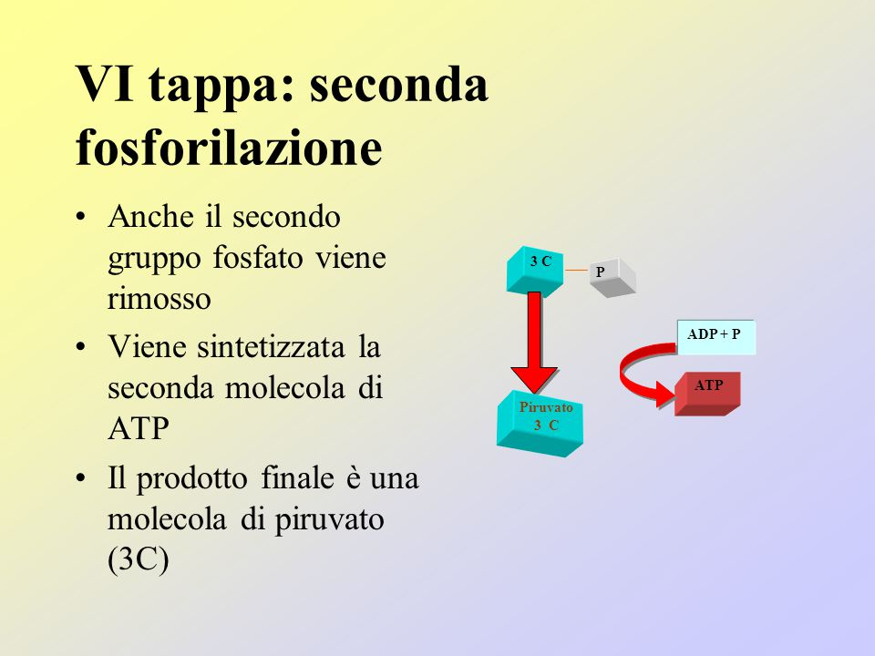 VI tappa: seconda fosforilazione