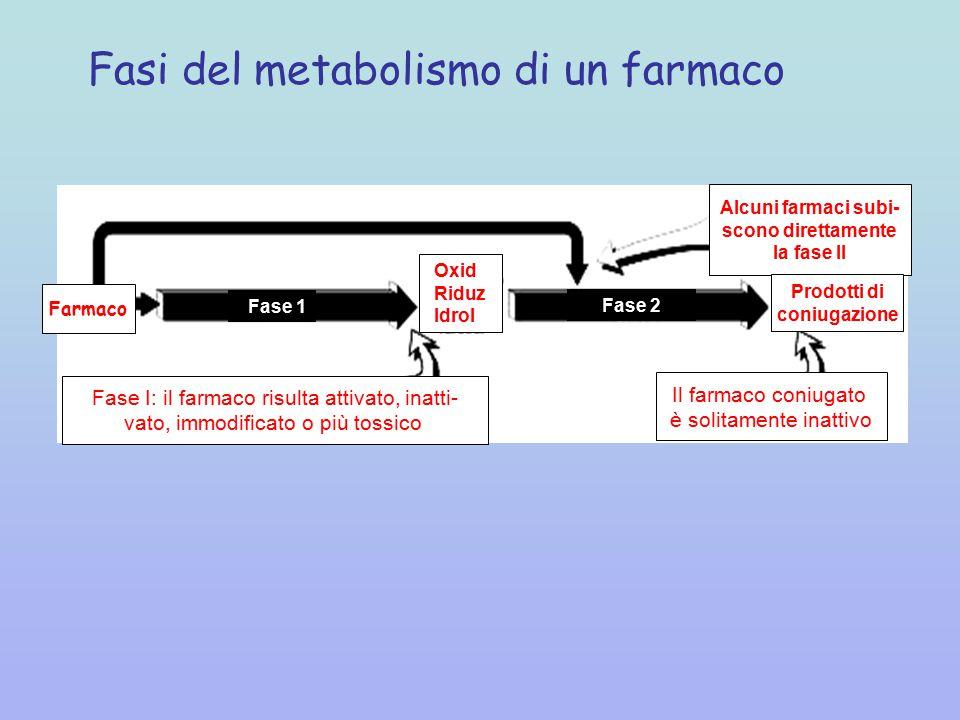 Fasi del metabolismo di un farmaco
