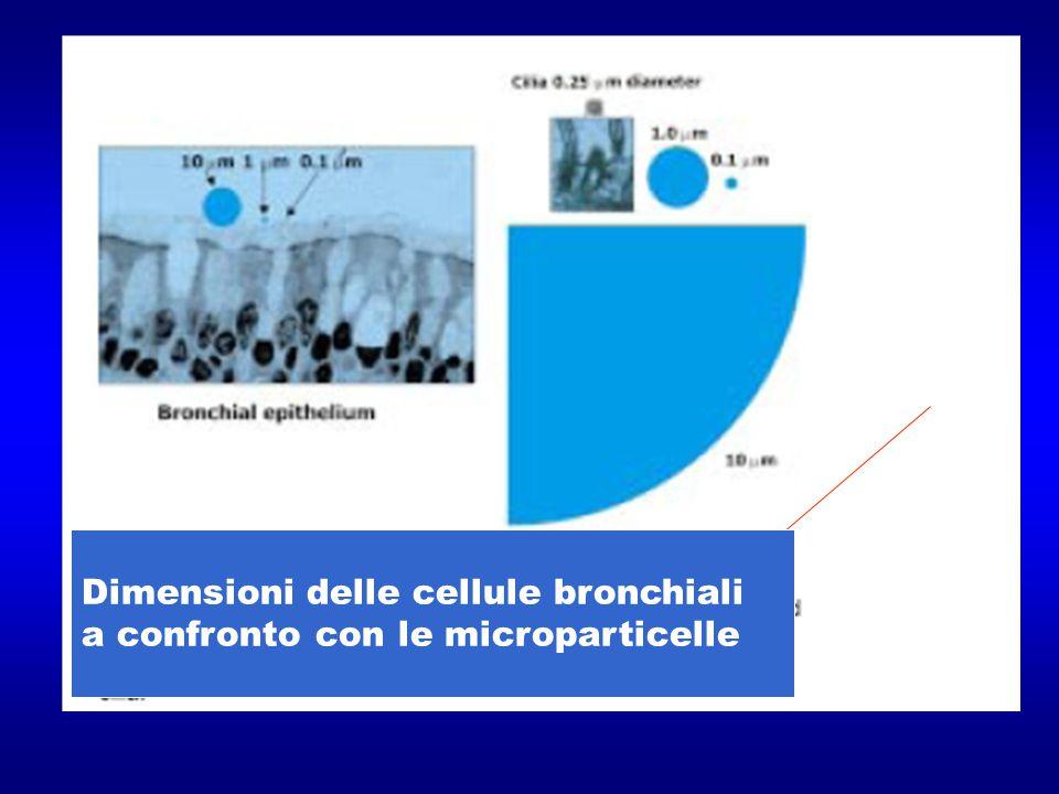 Dimensioni delle cellule bronchiali