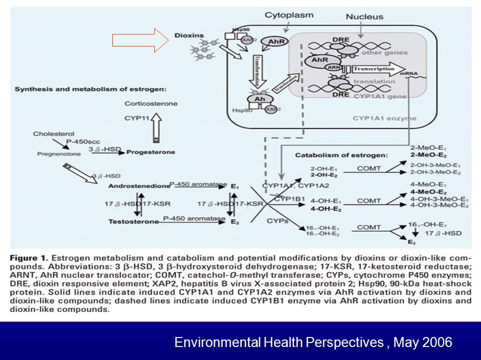 Environmental Health Perspectives , May 2006