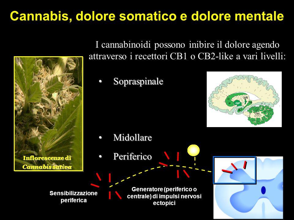 Cannabis, dolore somatico e dolore mentale