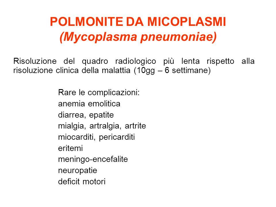 POLMONITE DA MICOPLASMI (Mycoplasma pneumoniae)