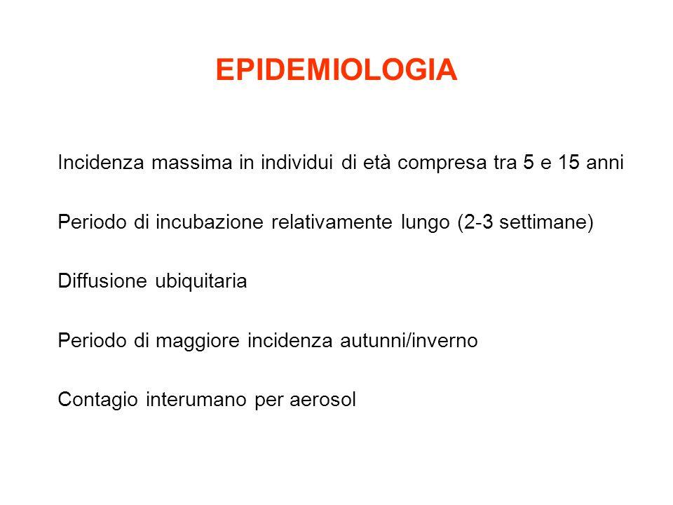 EPIDEMIOLOGIA Incidenza massima in individui di età compresa tra 5 e 15 anni. Periodo di incubazione relativamente lungo (2-3 settimane)