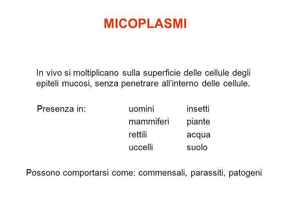MICOPLASMI In vivo si moltiplicano sulla superficie delle cellule degli epiteli mucosi, senza penetrare all'interno delle cellule.