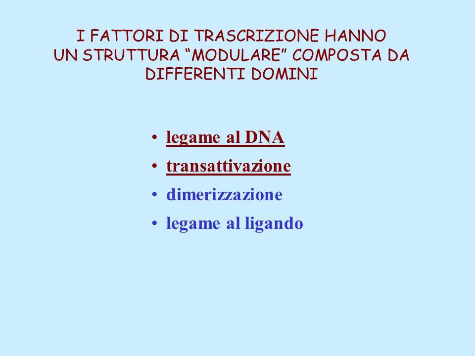 legame al DNA transattivazione dimerizzazione legame al ligando