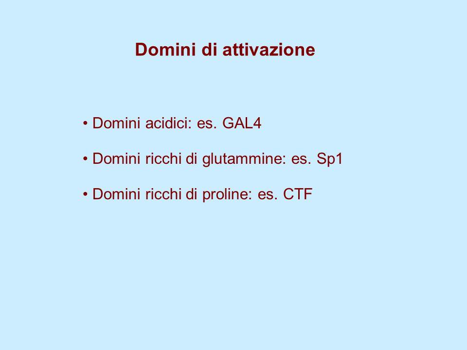 Domini di attivazione Domini acidici: es. GAL4