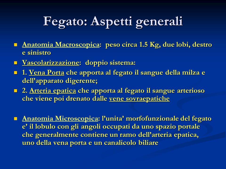 Fegato: Aspetti generali