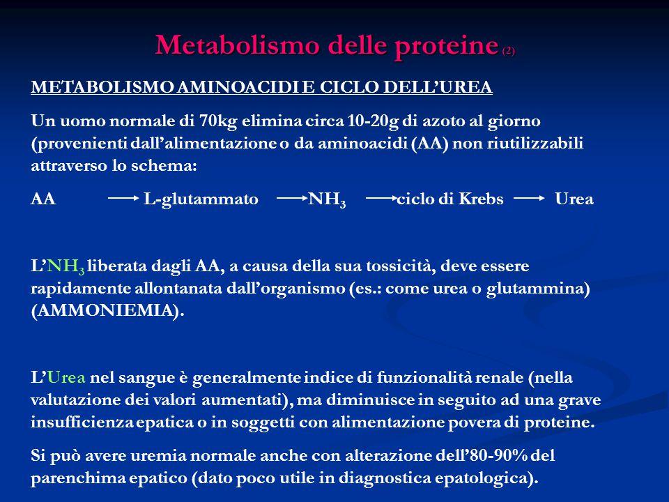 Metabolismo delle proteine (2)