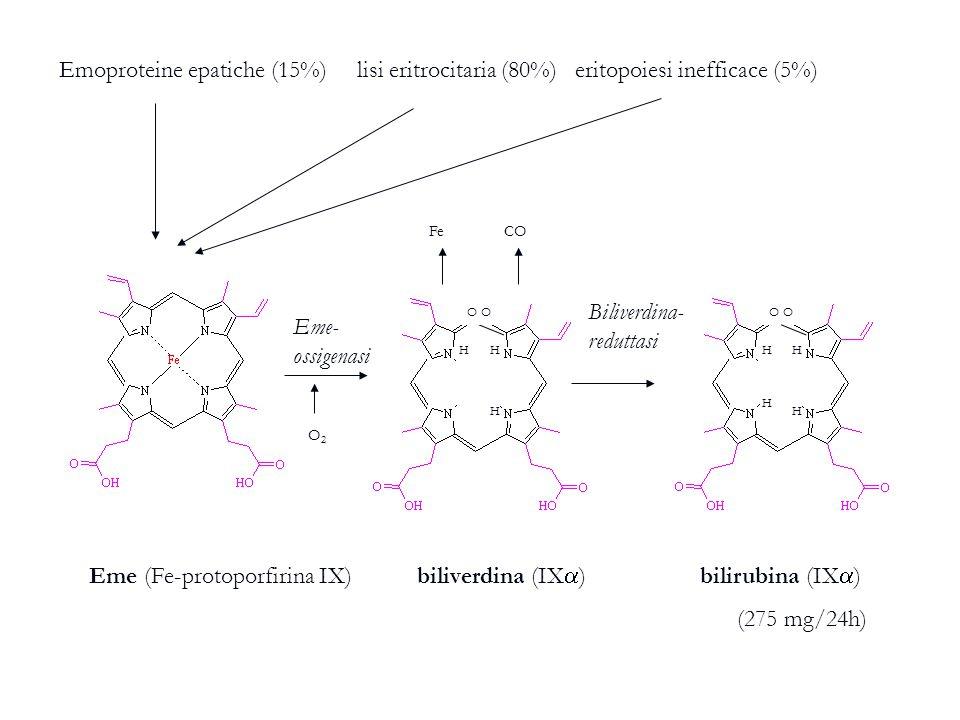 Biliverdina-reduttasi Eme-ossigenasi