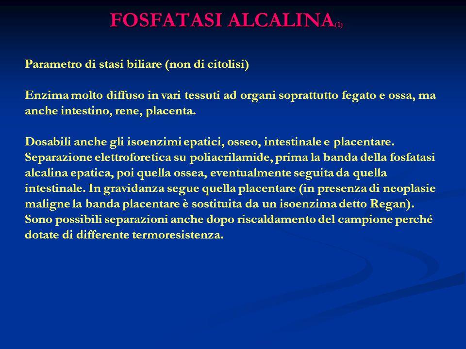 FOSFATASI ALCALINA(1) Parametro di stasi biliare (non di citolisi)