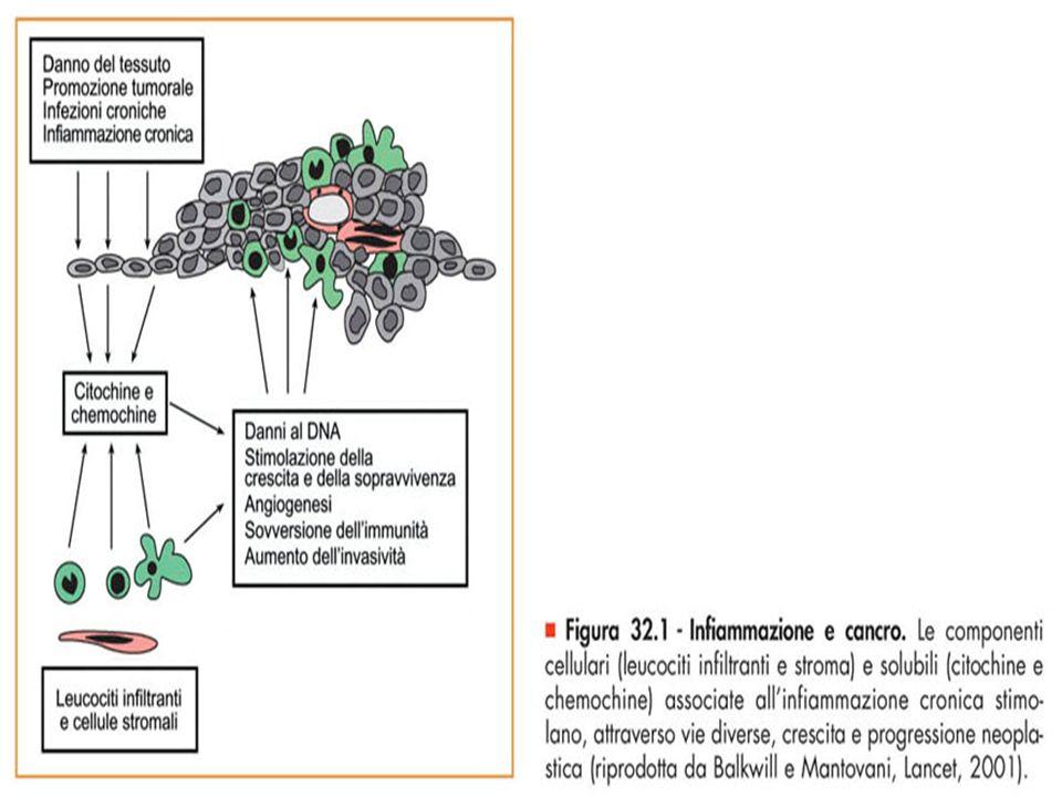 Figura 32.1 - Infiammazione e cancro.