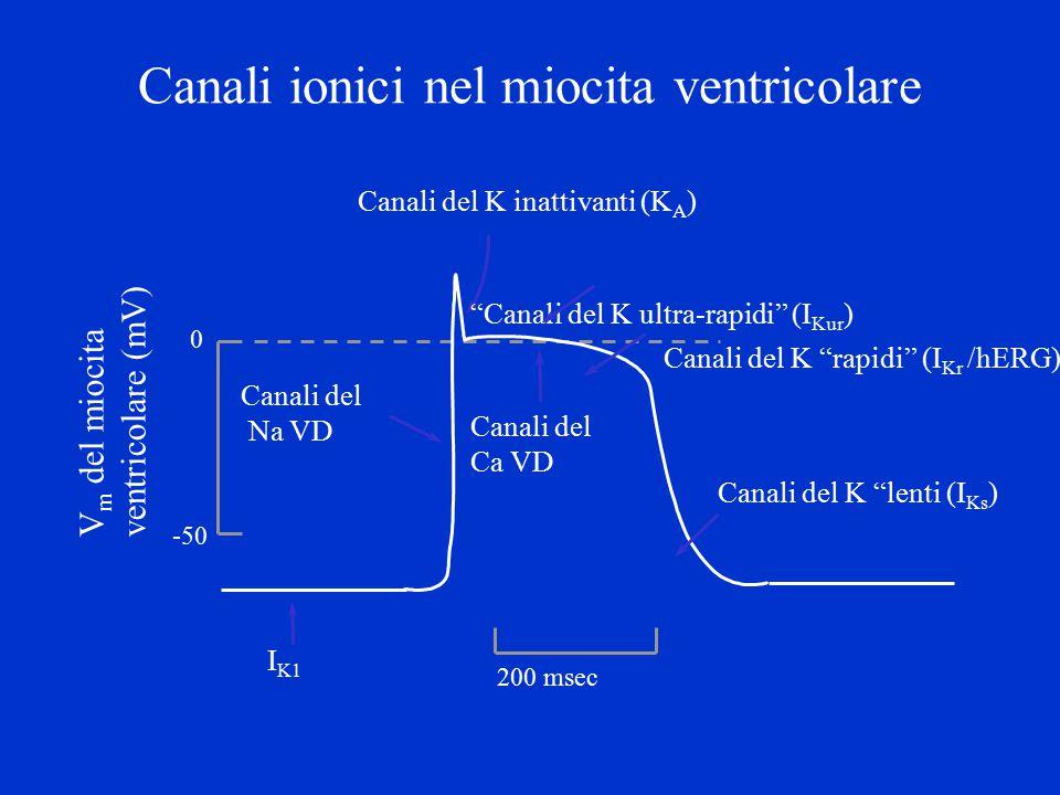 Canali ionici nel miocita ventricolare