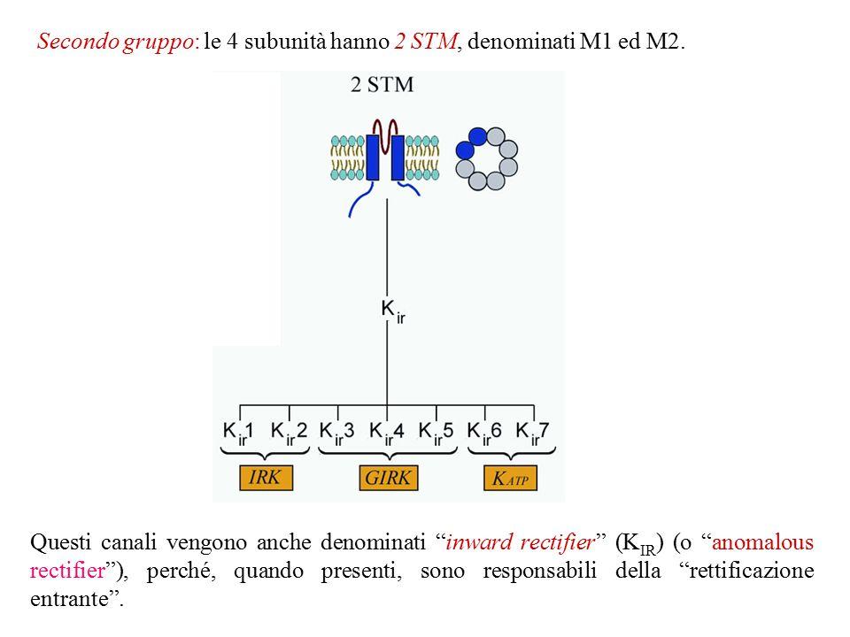Secondo gruppo: le 4 subunità hanno 2 STM, denominati M1 ed M2.