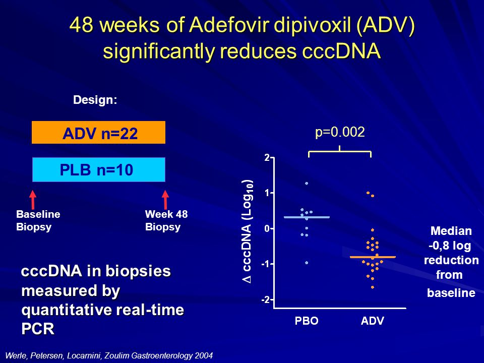 48 weeks of Adefovir dipivoxil (ADV) significantly reduces cccDNA