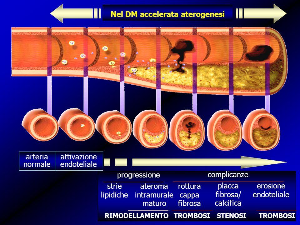 Nel DM accelerata aterogenesi